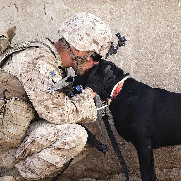 Soldaat en hond